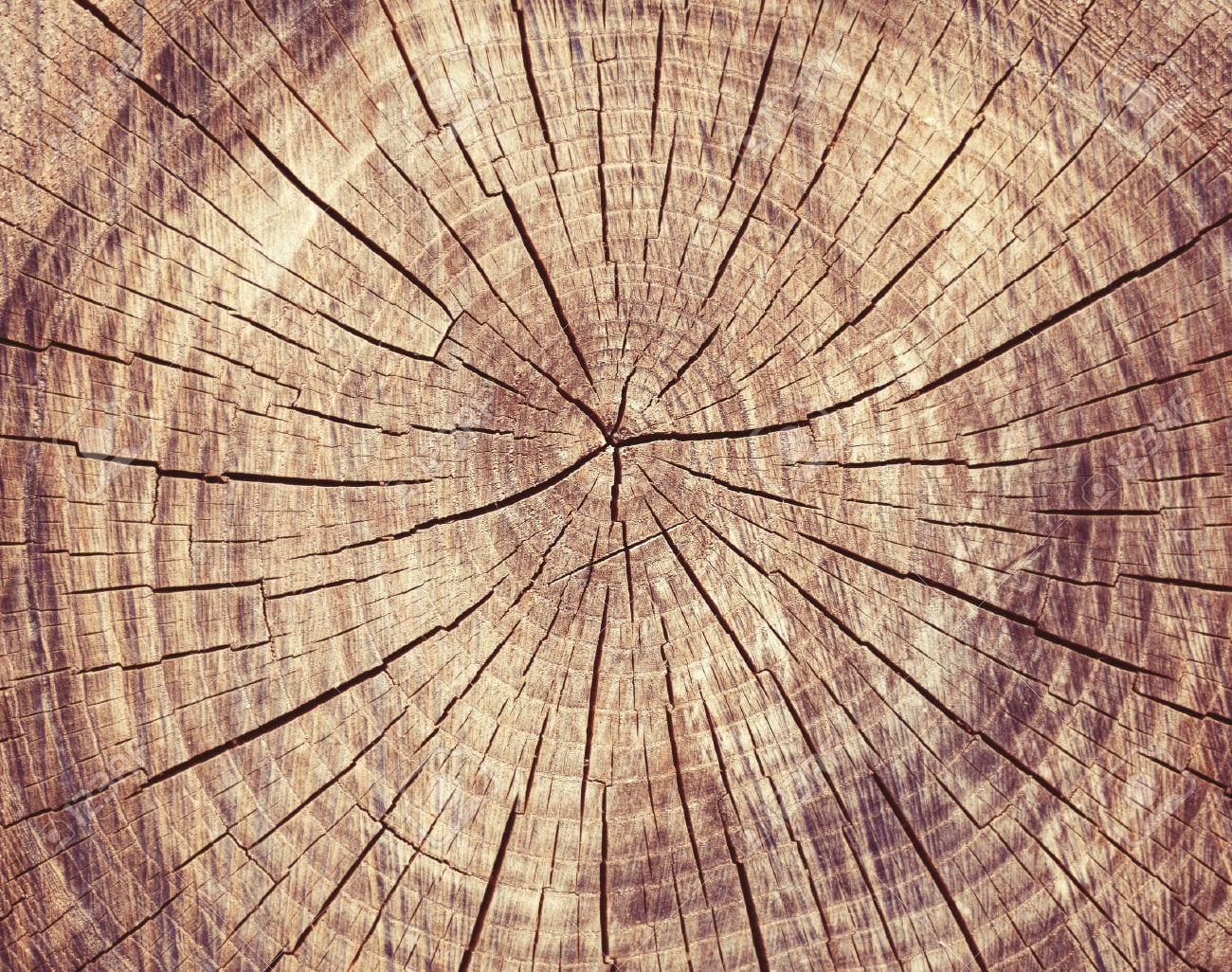 res rings detail full growth section high trunk annual picture tree photo showing stock cross frame photography